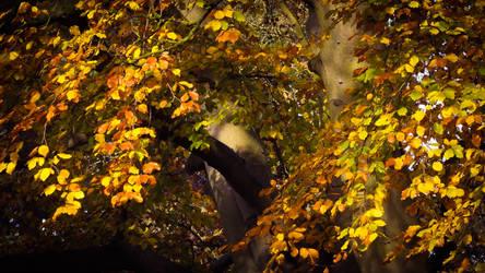 Mottled Fall
