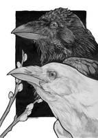 Ravens by Shaiyeh
