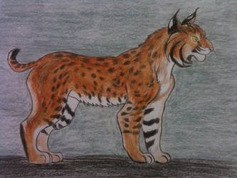 Solaris the Bobcat by Icewing10