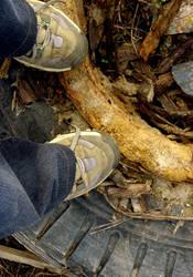 feet by TigerMom