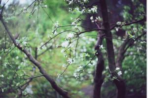 white by lenakudrei