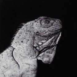 Iguana by zzzarina