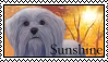 Survivors: Sunshine Stamp by Lots-of-Stamps