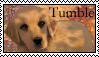 Survivors: Tumble Stamp by Lots-of-Stamps