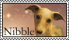 Survivors: Nibble Stamp by Lots-of-Stamps