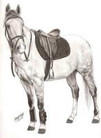 horse for horseluva by EqUiNeArTiStFoReVeR