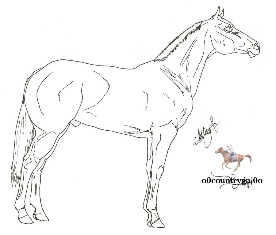 How To Draw Quarter Horseq
