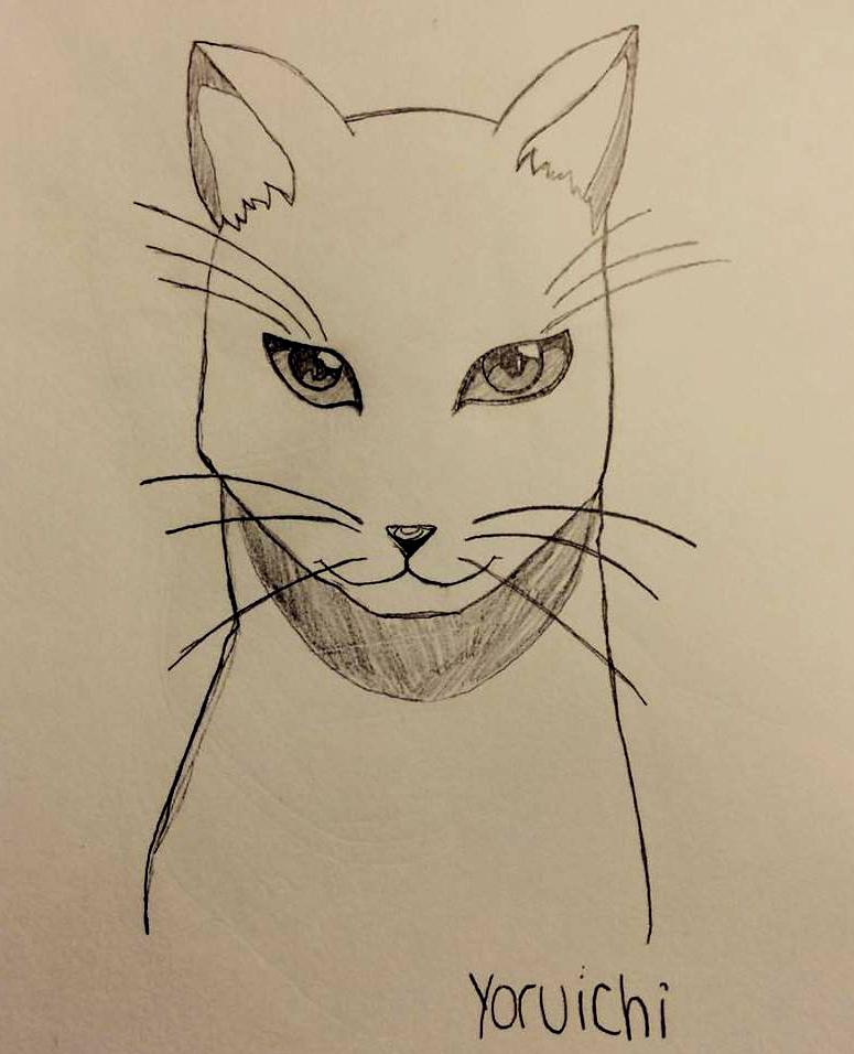 Bleach- Yoruichi (Cat form) by StormerIX on DeviantArt