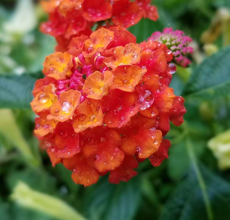 Orange in the Rain by Kyria-Neko-Chan