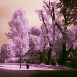 Infrared Park 2