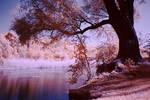 Infrared Wetlands