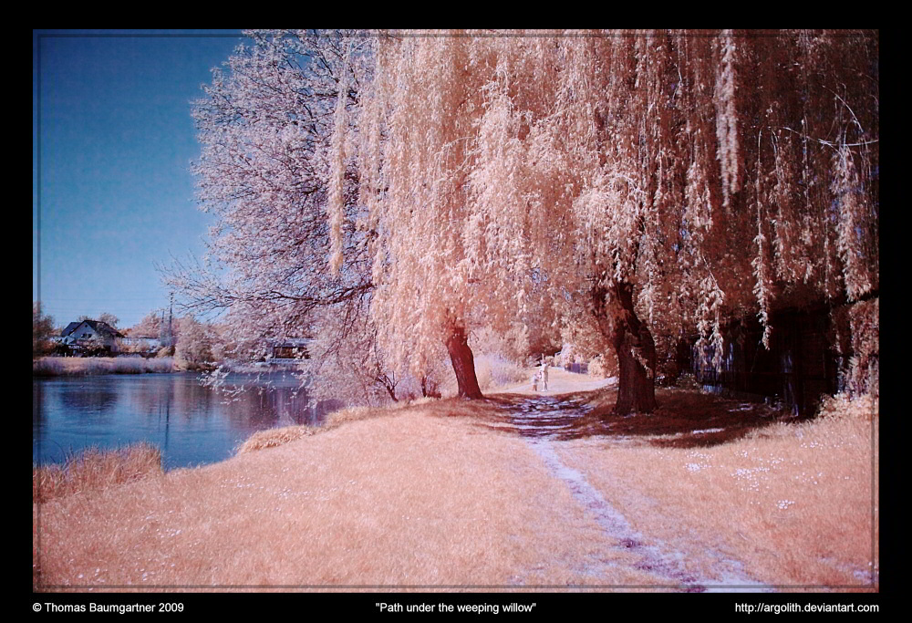 Path under the weeping willow by Argolith on DeviantArt