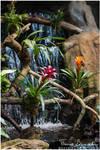 Bromeliads by Argolith