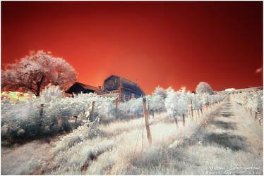 Beneath Red Skies