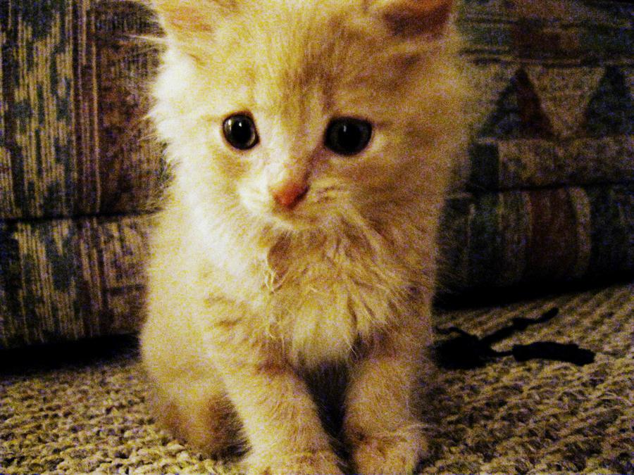 Kitty Cream by MasterpeiceMayhem