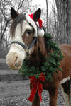 Happy Holidays from Sultan