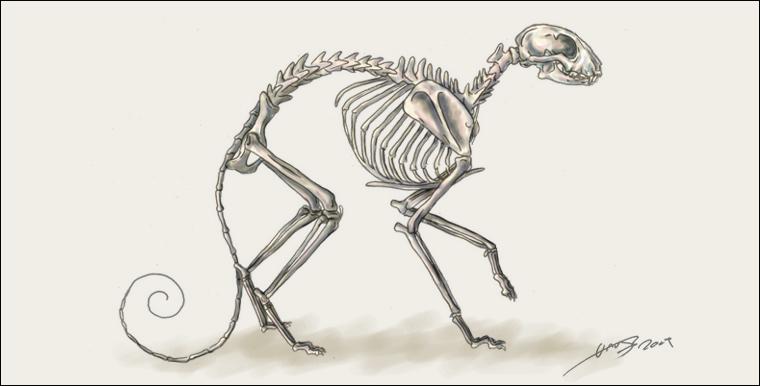 Cat Skeleton by liquidonyx on DeviantArt