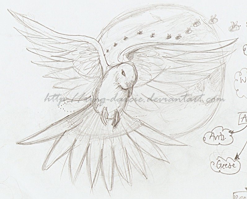 dove pencil drawing