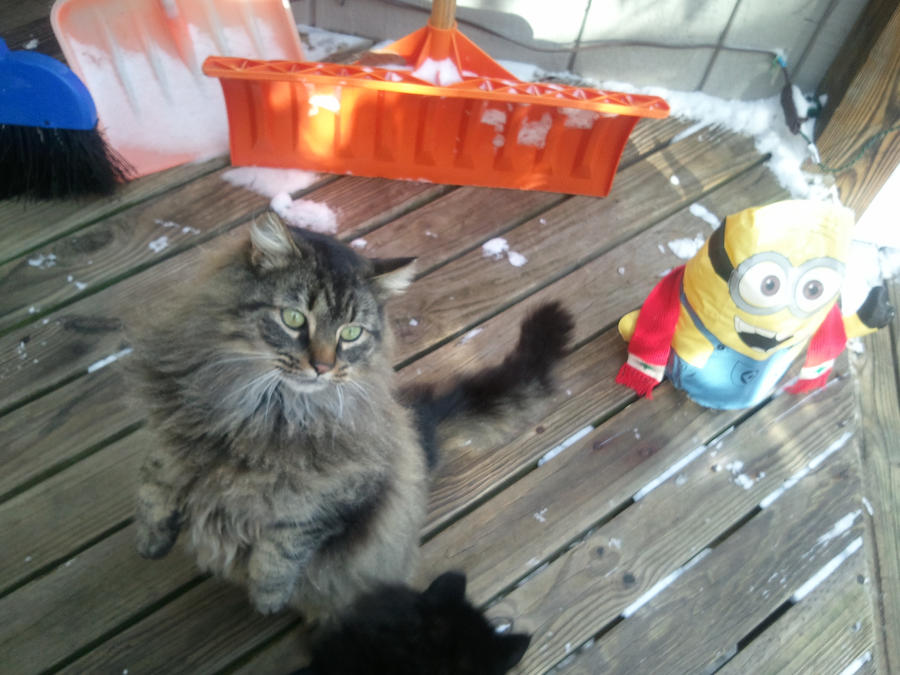 Cat Looking Both Ways Gif