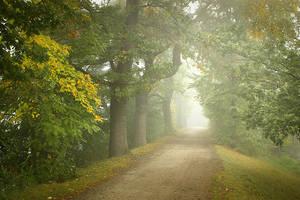 foggy autumn II by vlastas