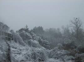 Snowy Bushes II by Kumidaiko