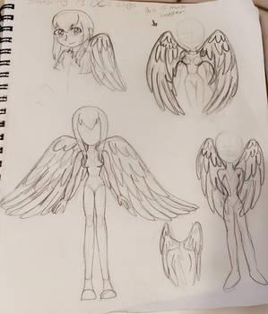 Random Wing Sketches