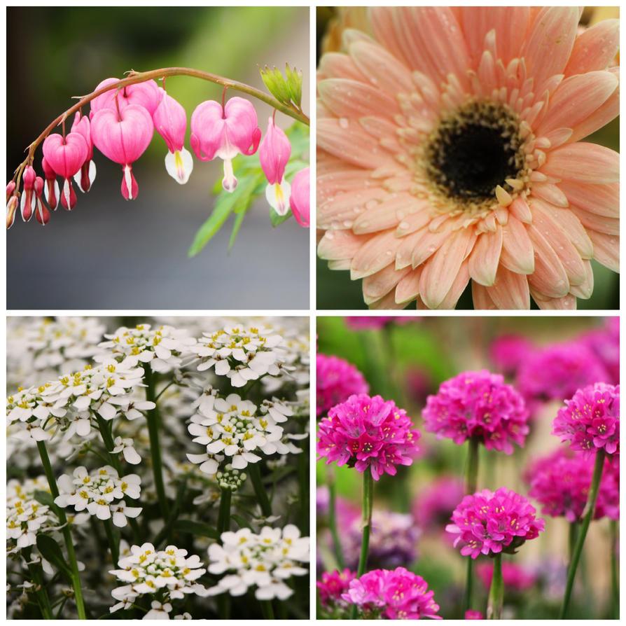 Floral Free Adobe Photoshop Action by SchatzFoto