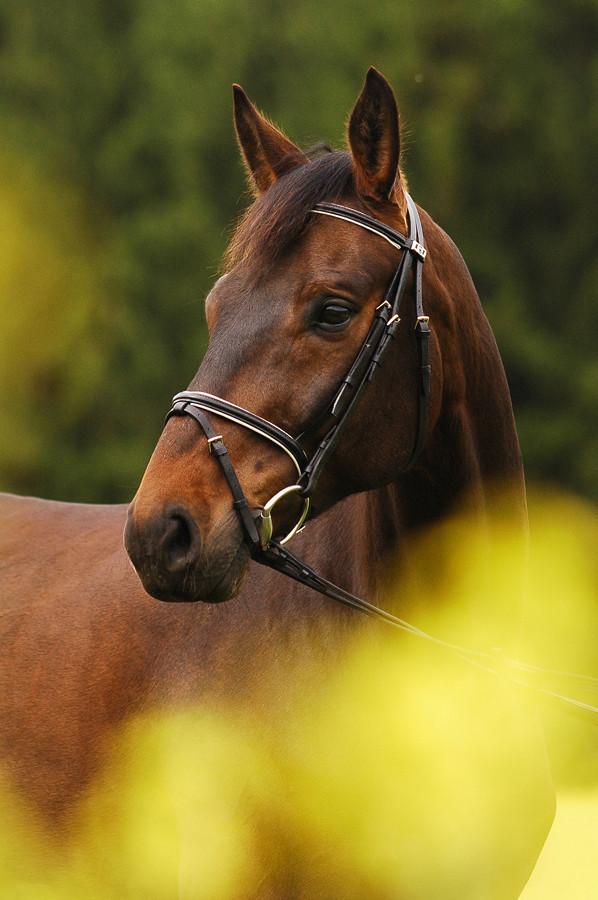 Coleseed Horse by Blashina
