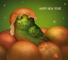 New year parrot by Nafrin