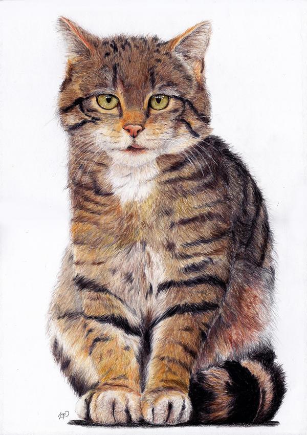 S.W. Cat by Stangie