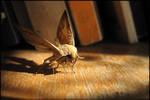 moth's life