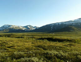 Arctic mountain meadow summer by Just-Stocks