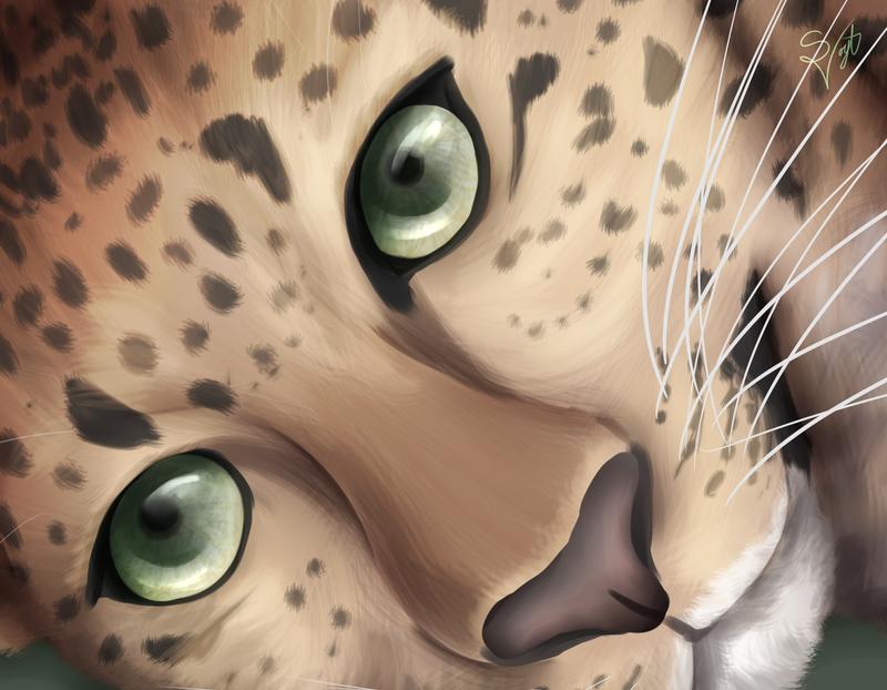 Cheetah by SOSArtStuff