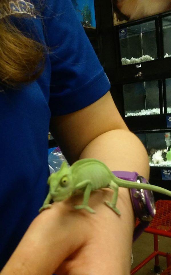 Chameleon by SOSArtStuff