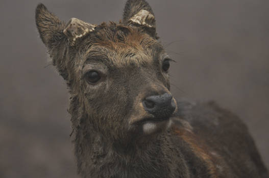 Deer Stock 5