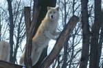 Wolf Winter 16