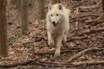 White Wolf 20