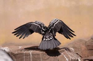 Vulture 1 by Lakela