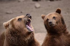 Bear 5 by Lakela