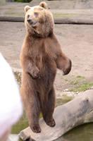 Bear 6 by Lakela