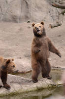 Bear 9 by Lakela