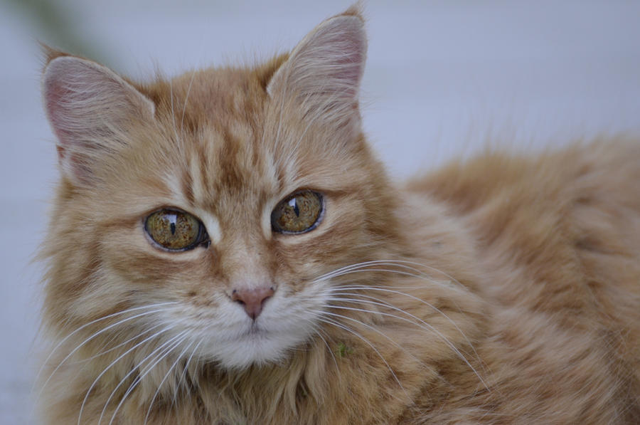 Cat 26