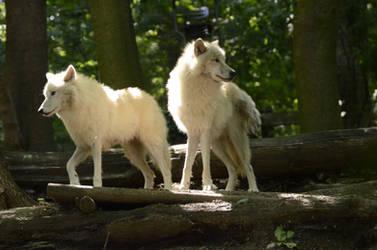 New White Wolves 14 by Lakela