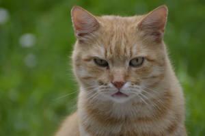 Cat 29 by Lakela