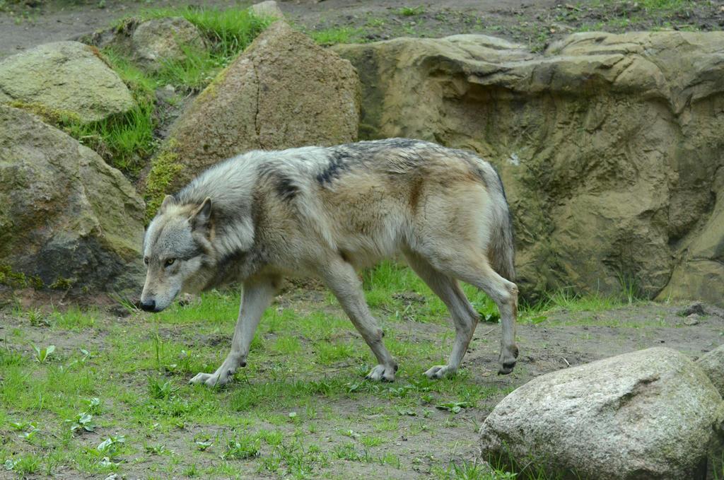 Timberwolf 28 by Lakela