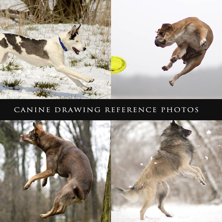 Canine Drawing Reference Photos