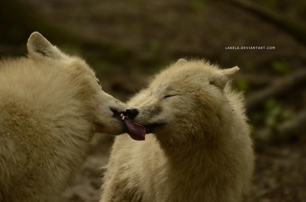 Kisses by Lakela