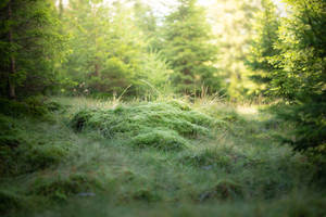 Mossy Place by Lakela