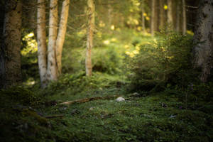 Forest 8 by Lakela