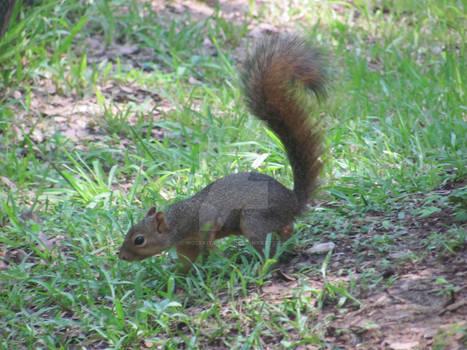 Philip the Squirrel